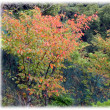 台風一過 秋本番(^^♪「秋の長雨=秋霖(しゅうりん)」もそろそろ終わり木々の紅葉が…
