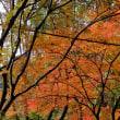 県民の森センター、こどもの国 紅葉
