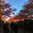 一足早く高野山の紅葉を堪能して来ました。