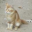 漫湖公園に逃げ込んできた愛らしい毛並みのいい猫さんです!飼い主の方はぜひ探しに来てください!
