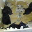 我が作業場で巣くう者達