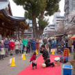 2018.02.16 文京区 湯島天神 梅祭り: 猿回し登場!