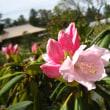 兼六園と金沢城の植物
