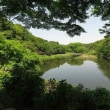 4/22(日)初心者向けバードウォッチング 神奈川県大和市・泉の森