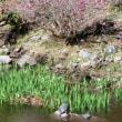 湯河原梅まつり