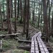 八千穂高原「白駒の池」に苔を見に行こう!