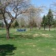 桜の下でパークゴルフが盛んです