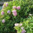 野辺に咲く花と…