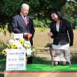 ショー 札幌全犬種クラブ展