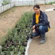 農業:外国人技能実習生 農閑期でも仕事ができるように