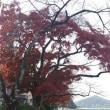 ツイードラン日和…犬山城~木曽川へ