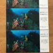 写真展「逗子サンゴものがたり」逗子文化プラザホールギャラリーで開催