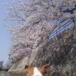 お花見カヤック2018(今更ながら・・・)