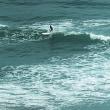 ある日の鴨川  サーファーがいっぱい  そして 相棒の誕生日