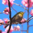 春よ来い!五輪の空の下