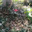 祇園宮を訪ねる(香川の神社182)