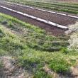 カボチャの畝作り