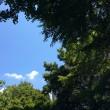 こんな天気だから見たい…青空とみどり