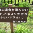 5月22日 花の屋久島 その4