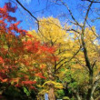 久山町の紅葉