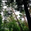 暑い夏の再来を待っている神代植物公園 その5