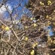春はもうすぐ 江ノ電で鎌倉へ