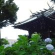 「アジサイ」/白山神社