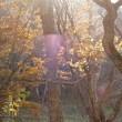 10月24日の赤城 撹満渕は冬のようだった。