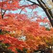 フレンドパーク・こさのぼ 都立庭園の紅葉