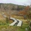 横根山、井戸湿原