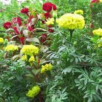花の写真、老境の精神の安定、達観の境地