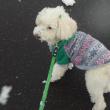 ラッセル車のごとく、雪を押しのけての散歩