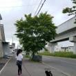 マメちゃんのお散歩!