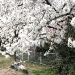 春爛漫(^。^)🌸🌸🌸