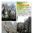 花巡り 「桜-その476」 池袋西口公園
