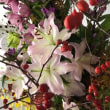 花から感じる「 秋 」