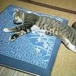 睡魔と戦う…!