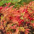 ウワーオ! すばらしい紅葉だなー!
