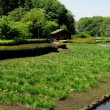 蟹ヶ谷公園