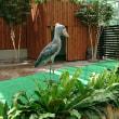 9月9日(土)…MikaIshiwata犬クラス鳥クラス