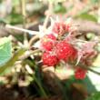 12月昭和の森「生き物たちの冬」観察会