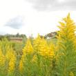 黄色の秋。
