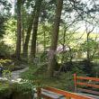 近江・桜二景 1  (石山寺)