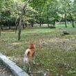 夜宮公園の日本庭園