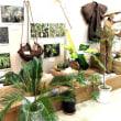琉球の植物の企画展に!