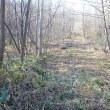 続散策路の枯れ草刈り