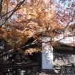 深大寺の晩秋