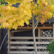 薪棚と黄葉