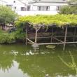 亀戸天神社です