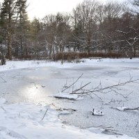 凍てつく森とコゲラ、アカゲラ…